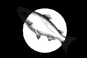 Доставка рыбы в Екатеринбурге